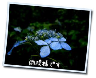 c0042869_2033293.jpg
