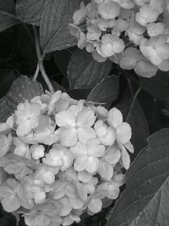 f0100480_15574112.jpg