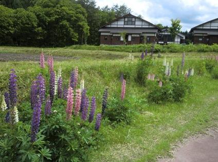 花と家_f0227395_1148254.jpg