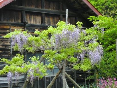 花と家_f0227395_1148781.jpg