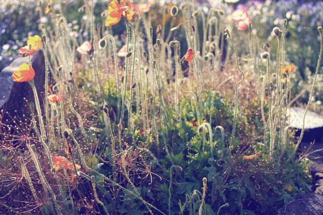 The Garden_a0214416_165974.jpg