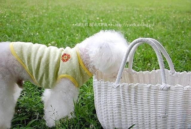 梅雨空さんぽ_d0083623_20475216.jpg