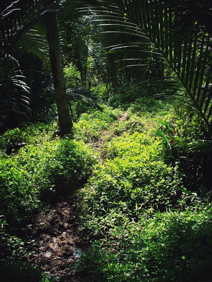 A Path_e0202828_2334813.jpg