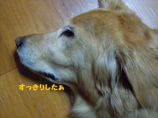 f0114128_2102053.jpg