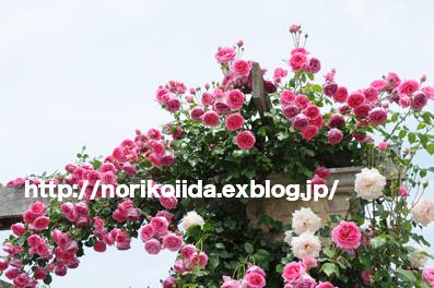 d0086230_0224762.jpg