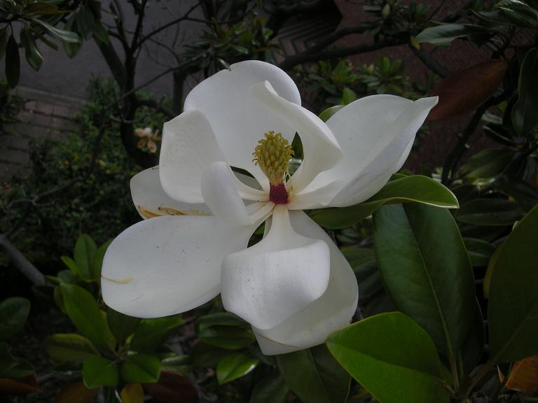 筑波大学へ_d0166534_23675.jpg