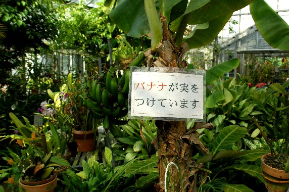 和歌山県植物公園緑花センター _b0093754_23494742.jpg