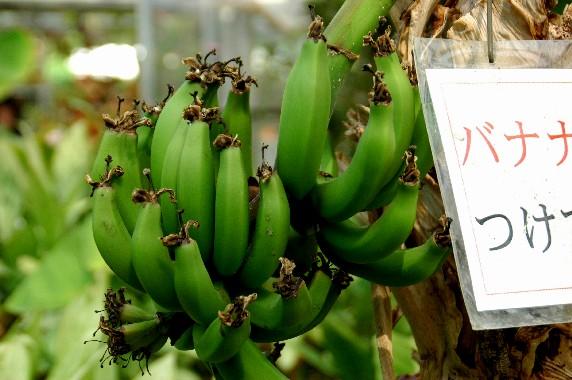 和歌山県植物公園緑花センター _b0093754_23495379.jpg