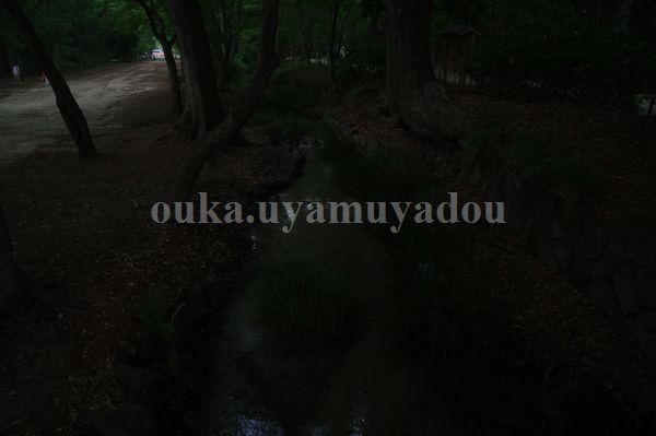 糺の森には命・愛がある..._a0157263_7335575.jpg