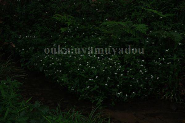 糺の森には命・愛がある..._a0157263_734921.jpg