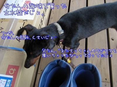 a0091865_16581844.jpg