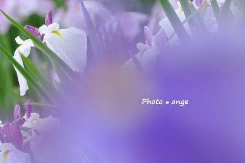 a0212365_064263.jpg