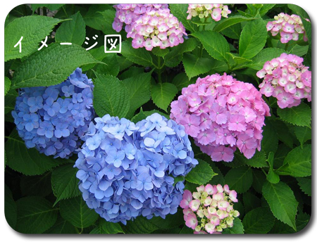 c0032567_13303888.jpg
