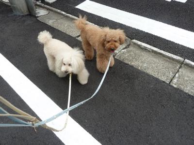 2011.6.19  本とさや(浅草)_a0083571_22554958.jpg