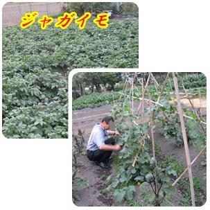 b0149071_1616478.jpg