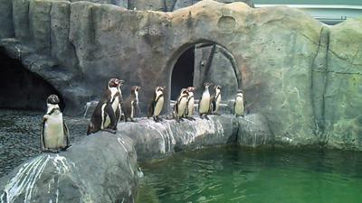 福山市立動物園とホロコースト_e0173183_13511433.jpg