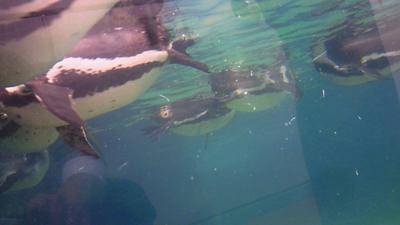 福山市立動物園とホロコースト_e0173183_13512988.jpg