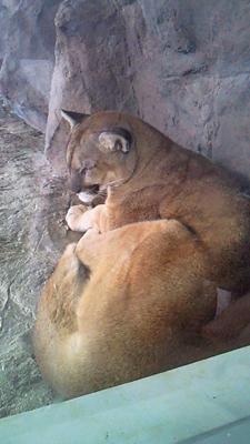 福山市立動物園とホロコースト_e0173183_13515046.jpg