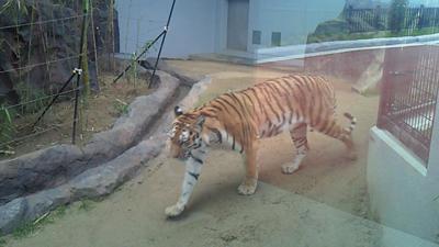 福山市立動物園とホロコースト_e0173183_1352757.jpg