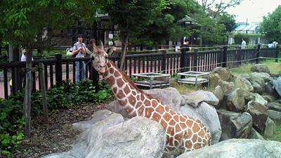 福山市立動物園とホロコースト_e0173183_13563785.jpg