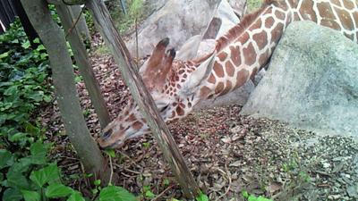 福山市立動物園とホロコースト_e0173183_13565156.jpg