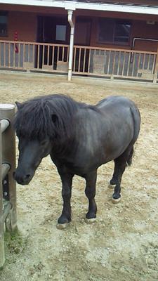 福山市立動物園とホロコースト_e0173183_1358596.jpg
