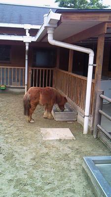 福山市立動物園とホロコースト_e0173183_13591050.jpg