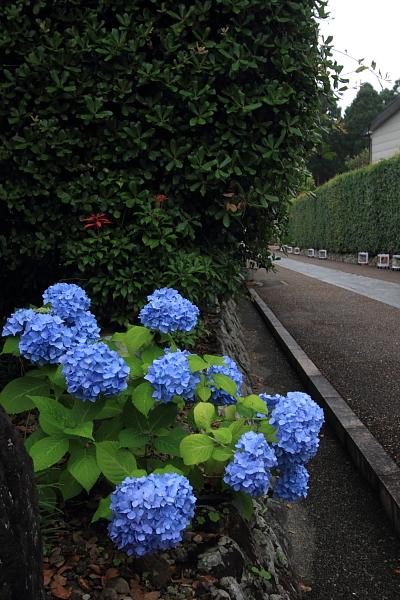 三室戸寺_e0051888_0143156.jpg