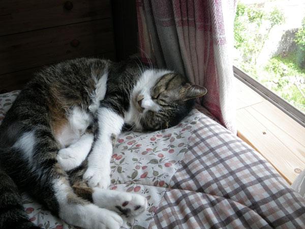 夏の手前の猫部屋&Huuの舐めハゲのことなど_a0136293_15232435.jpg