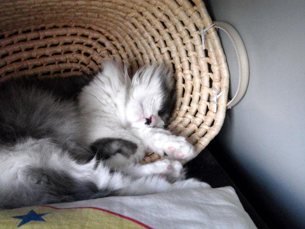夏の手前の猫部屋&Huuの舐めハゲのことなど_a0136293_15305996.jpg