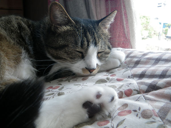 夏の手前の猫部屋&Huuの舐めハゲのことなど_a0136293_16295240.jpg