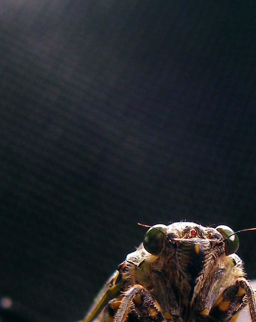 Cicada Game_c0095801_1032695.jpg