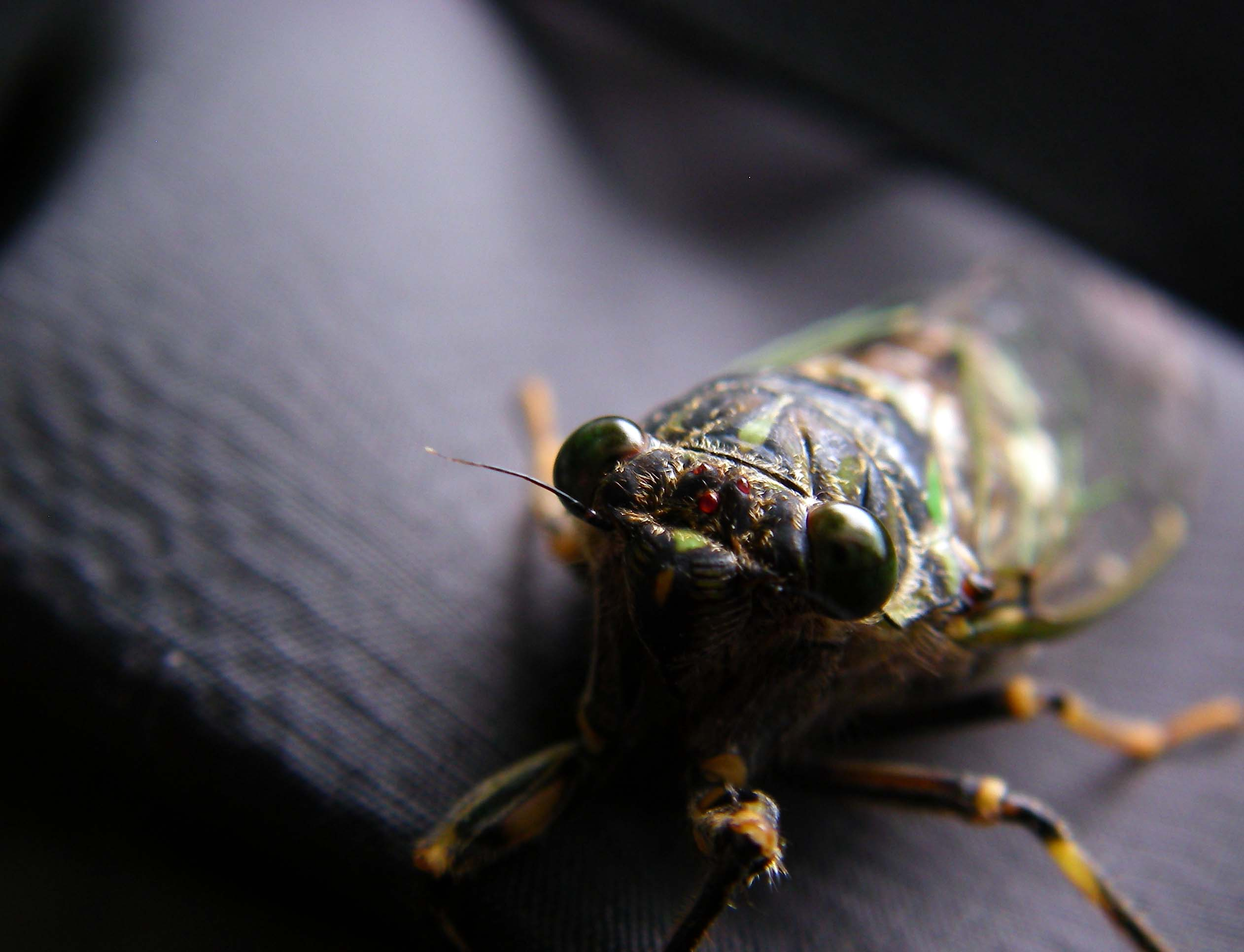 Cicada Game_c0095801_1033575.jpg