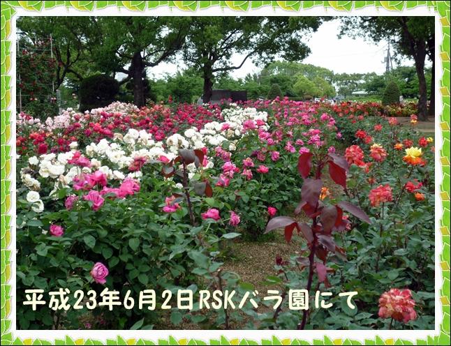 a0204402_143068.jpg