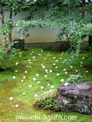 京のオトナの修学旅行・初夏_f0184004_2044481.jpg
