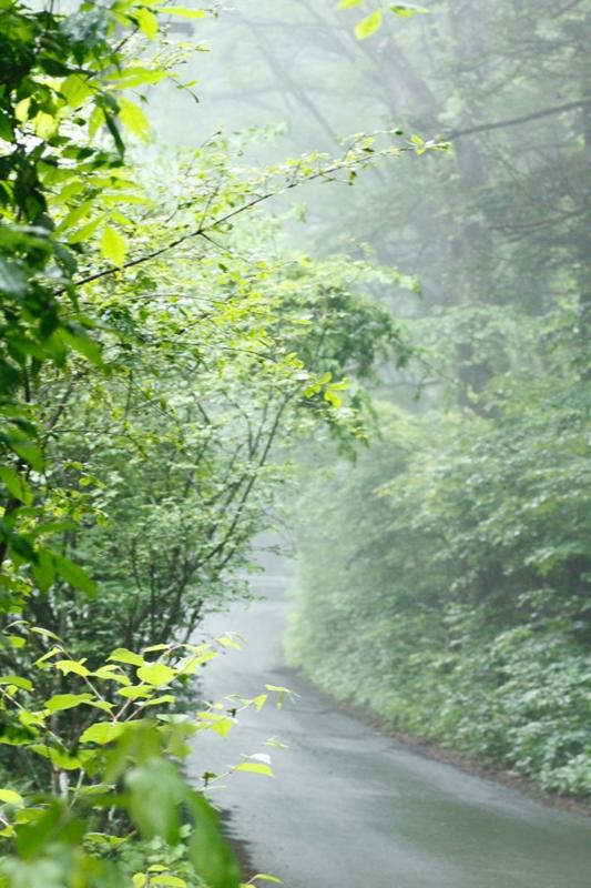 靄の日_f0091207_12453117.jpg
