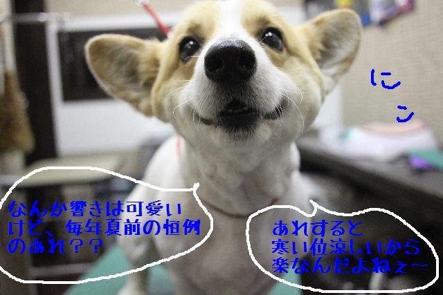 b0130018_160371.jpg