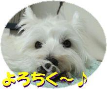 f0084422_1249211.jpg