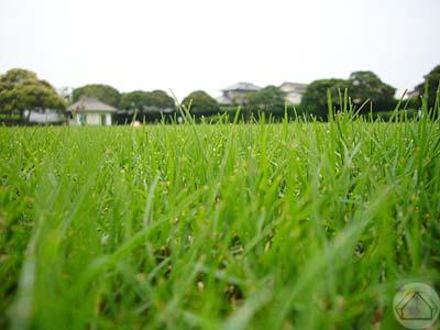 ∵梅雨の中休みの公園で_d0040733_1616726.jpg