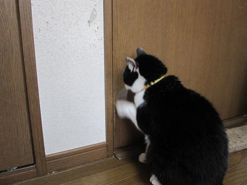 キイくん☆正式譲渡_e0229436_22285154.jpg