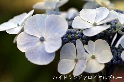 b0078137_134686.jpg