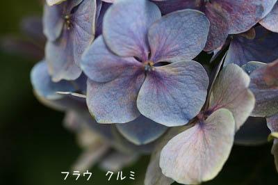 b0078137_17285041.jpg