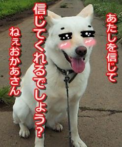 f0195543_222274.jpg