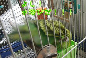 f0196665_042951.jpg