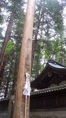 ふるさとエレジー(13) ~ 青き林檎 ~_b0102572_11273316.jpg