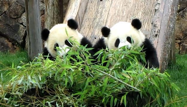 パンダ、大きくなってた!_b0064176_19211320.jpg