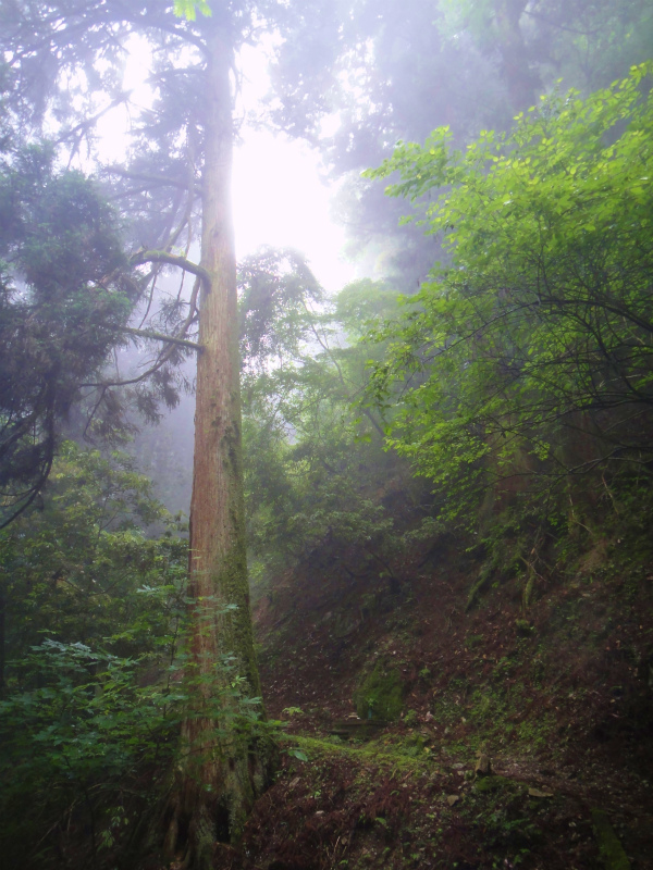 2011/06/18 Long trail session in 京都_b0220886_16435511.jpg