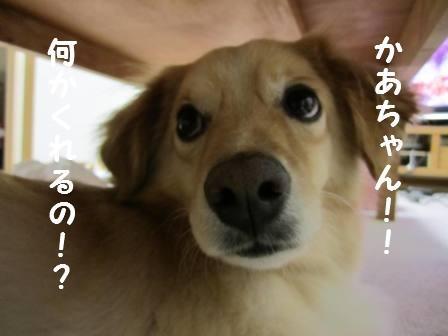 c0196992_150742.jpg