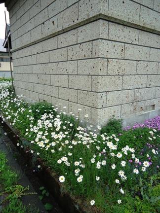 白い花_f0227395_15483026.jpg