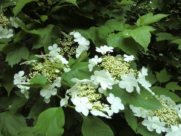 白い花_f0227395_15511216.jpg